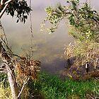 0089  Still Waters Tuross Lake by Peter Hogarth