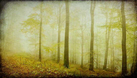 mist in the woods by Iris Lehnhardt