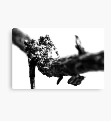 Where Thorns Are Born Canvas Print
