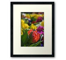 Spring Flowers Meadow Framed Print