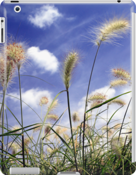 Feathery grasses against a blue summer sky by John Gaffen