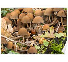Bonnet Fungus Poster