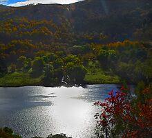Autumn by Donald  Stewart