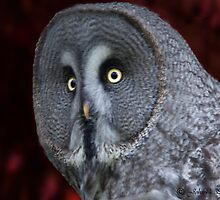 A wise old owl ..... by John44