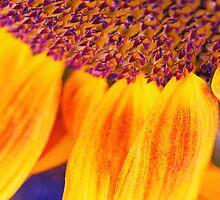 Sunflower III - Ipad case by Silvia Ganora by Silvia Ganora