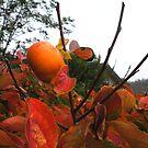 UnFallen Fruit by waddleudo