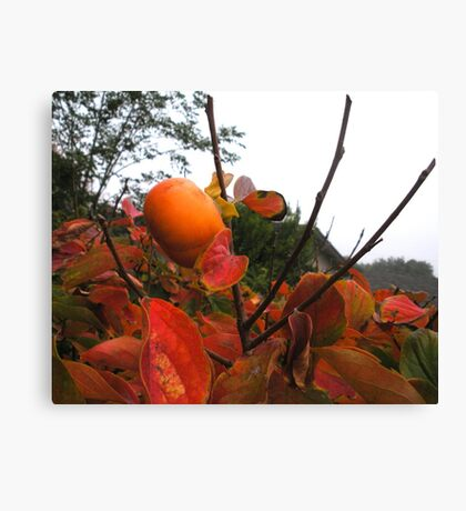 UnFallen Fruit Canvas Print