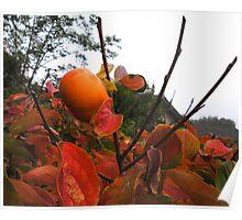 UnFallen Fruit Poster