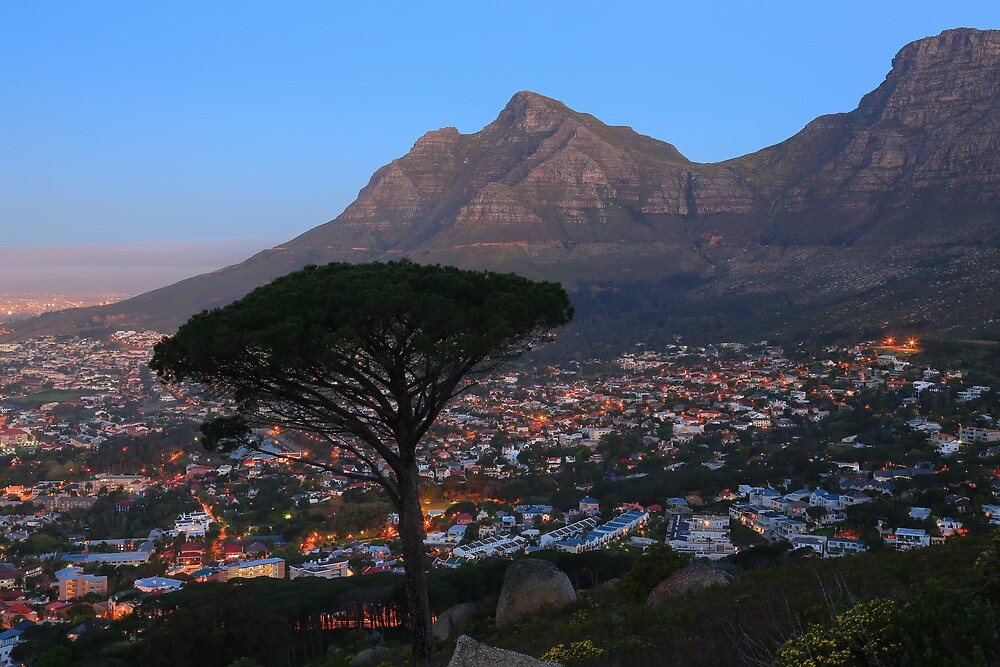 A Tree, a Mountain and a City. by Cameron B