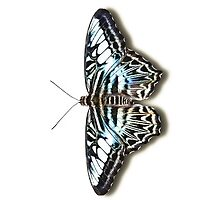 Smartphone Case - Butterfly - Blue Clipper by Mark Podger