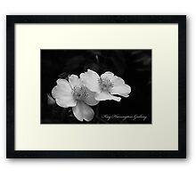Texas Cherokee Rose Framed Print