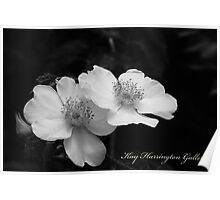Texas Cherokee Rose Poster