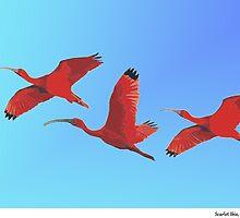 Scarlet Ibis, Caroni, Trinidad. by santimanitay