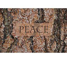 Peace Tree Photographic Print