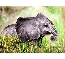 Elephant in the grass Photographic Print
