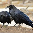Roaring Mountain Raven Pair by DWMMPhotography