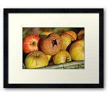 Bad apple in the basket Framed Print