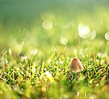 little mushroom in early morning light... by Gregoria  Gregoriou Crowe