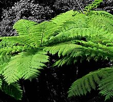 El Junque Fern Fronds by Rosemary Sobiera