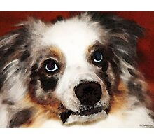 Aussie Dog Art - Loving Eyes Photographic Print