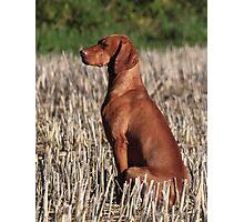 Aristo dog Photographic Print