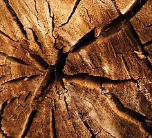 Cracked Wood by RainaRaina