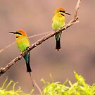 Rainbow Bee- Eaters Male and female by Kym Bradley