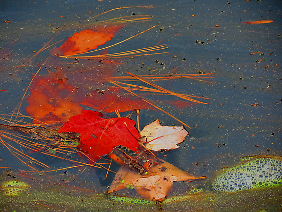 pond leaves, needles and scum by Alex Call