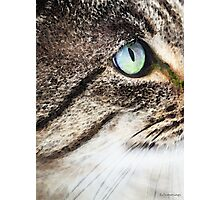 Cat Art - Looking For You Photographic Print