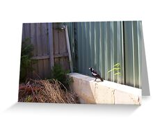 Magpie - 07 11 12 -  Four Greeting Card