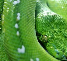 Green Tree  Python by Cynthia48