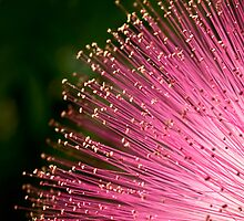 Pink fireworks tipped with gold for iPad by Celeste Mookherjee