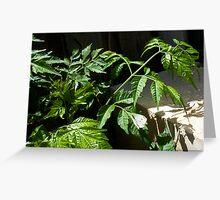 Cabbage Moth - 06 11 12 Greeting Card