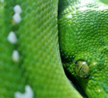 Green Tree  Python Sticker