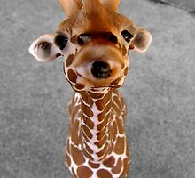 Cheeky Giraffe by Hannah Ruth