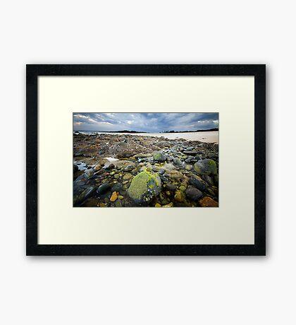 Saltwater Moss Framed Print