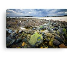 Saltwater Moss Canvas Print