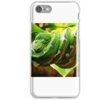 Amazonian Tree Boa iPhone Case/Skin