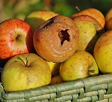 Rotten apple in the basket by David Fowler