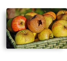 Rotten apple in the basket Canvas Print