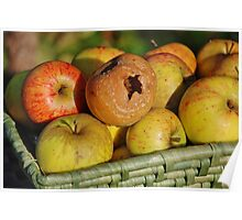 Rotten apple in the basket Poster