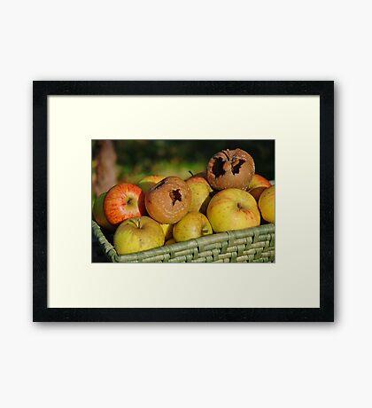 Bad apples in the basket Framed Print