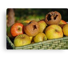 Bad apples in the basket Canvas Print