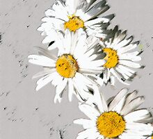 DAISIES as i Pad Case by OlaG