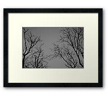 Spooky trees Framed Print