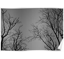 Spooky trees Poster