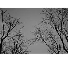 Spooky trees Photographic Print