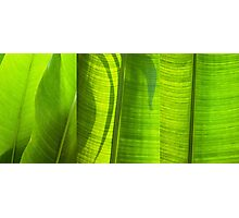 green leaf Photographic Print