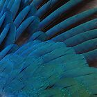 Iridescence in feathers by venitakidwai1