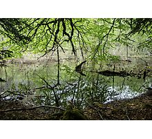 Dense Everglades - Nature Photography Photographic Print